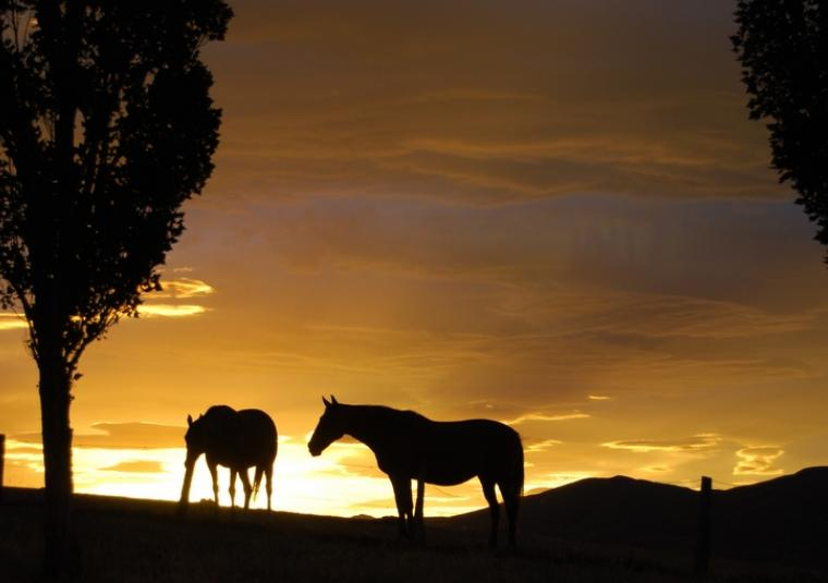 Horses for web