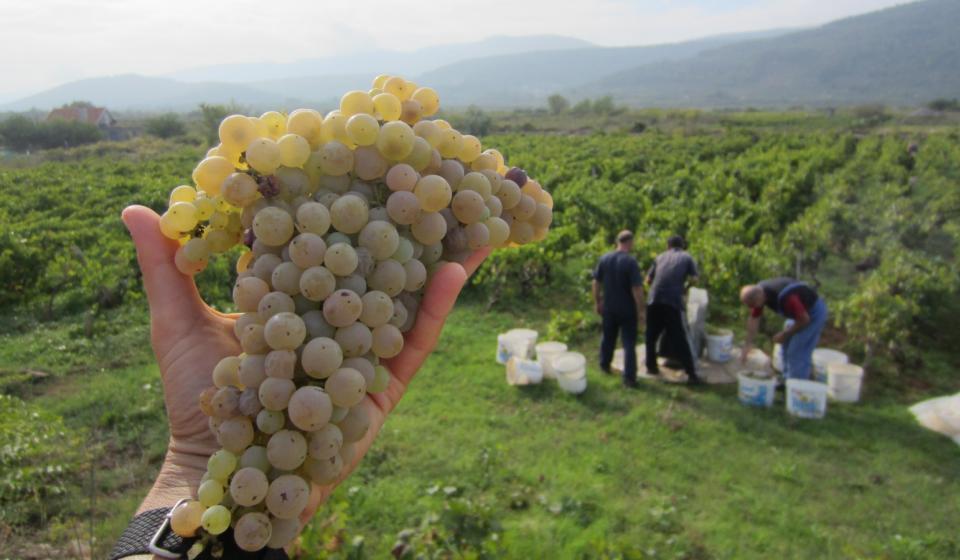 Grapes x webpage