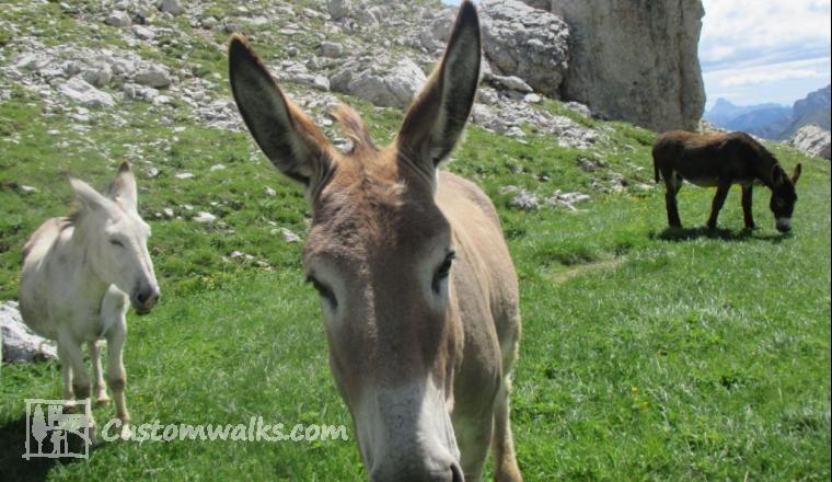 Donkeys passo giau
