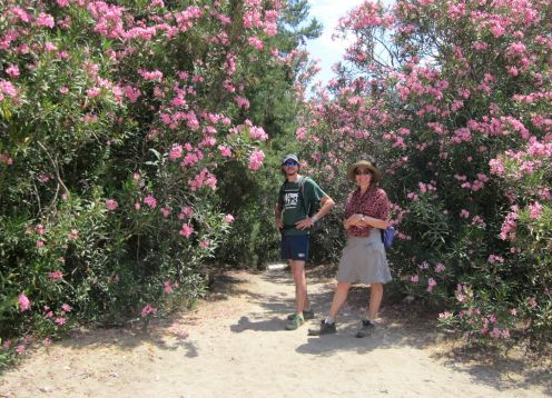 Day 6 oleander forest