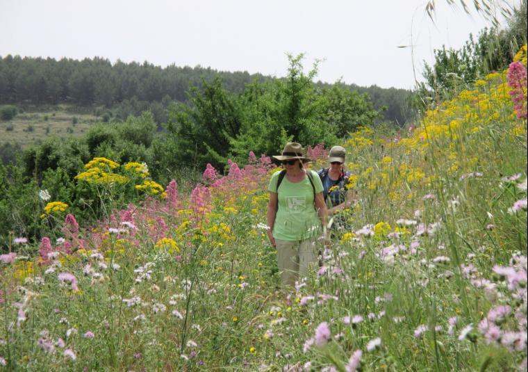35 wildflowers pantalica customwalks