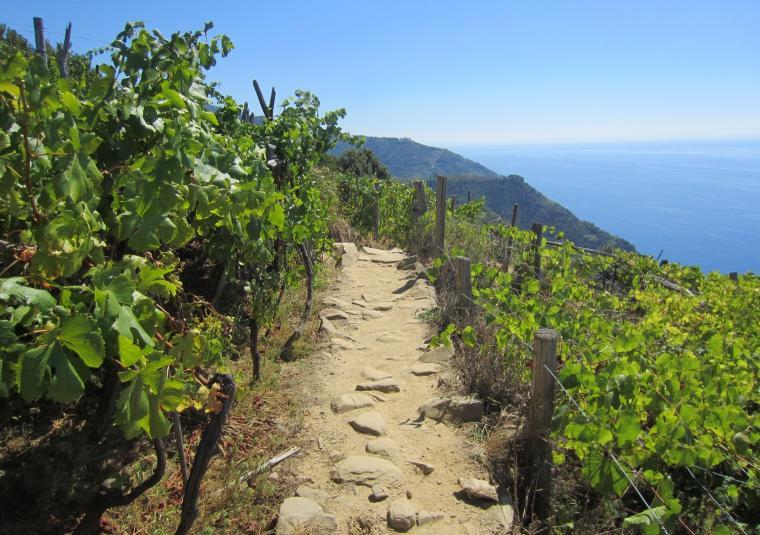 51 hiking through vineyards