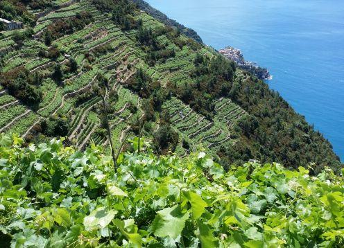 53 more hiking through vineyards