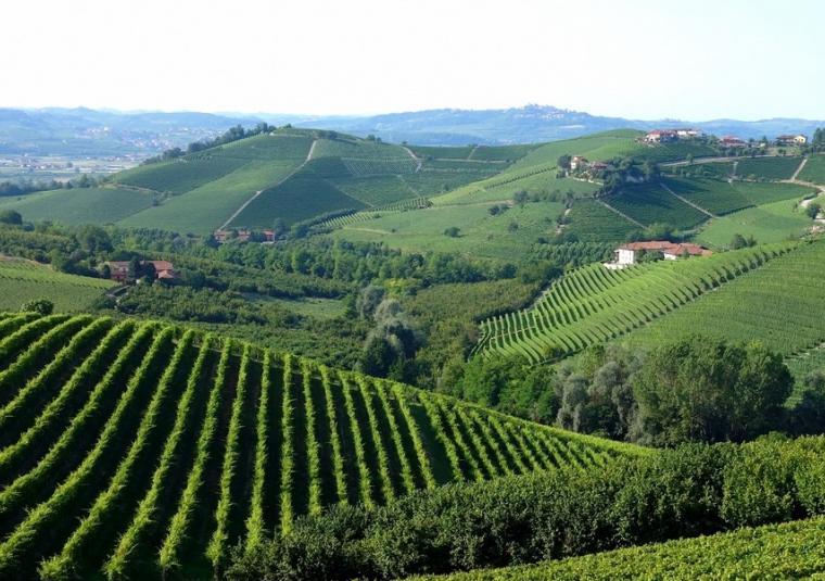 01 piedmont vineyards mondo bike tours