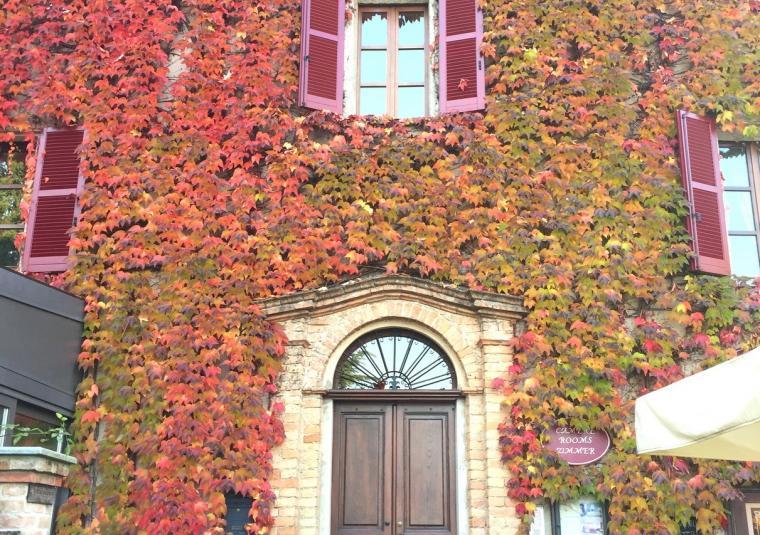 10 fall colors piedmont customwalks