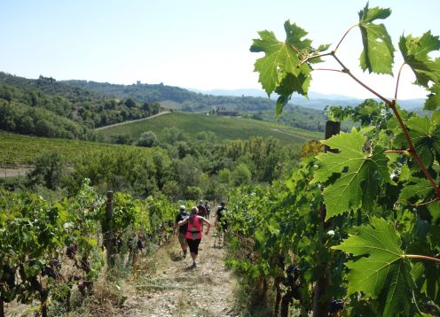 Hiking vineyards customwalks