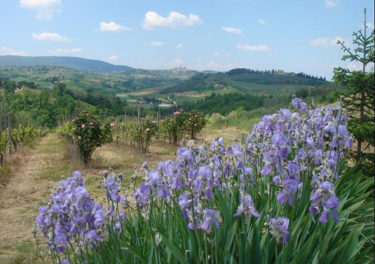 Flowers iris at bibb-2