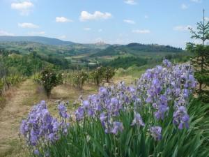 Flowers iris at Bibb